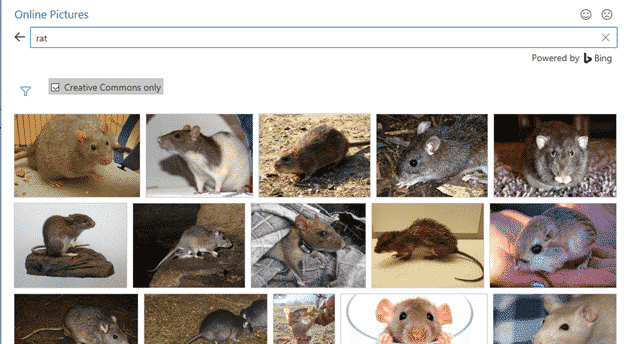 year of the rat in microsoft office 34258 - Year of the Rat in Microsoft Office