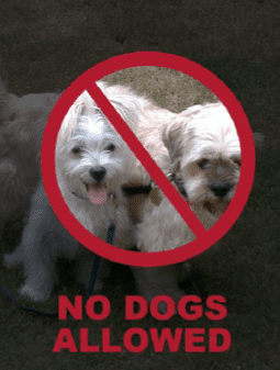 No Dogs - Eye-catching Signs with Word